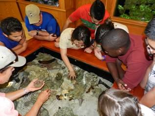 Students touch live sea urchins.