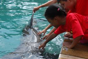 The students also got the opportunity to touch the dolphins.