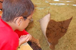 Feeding stingrays.